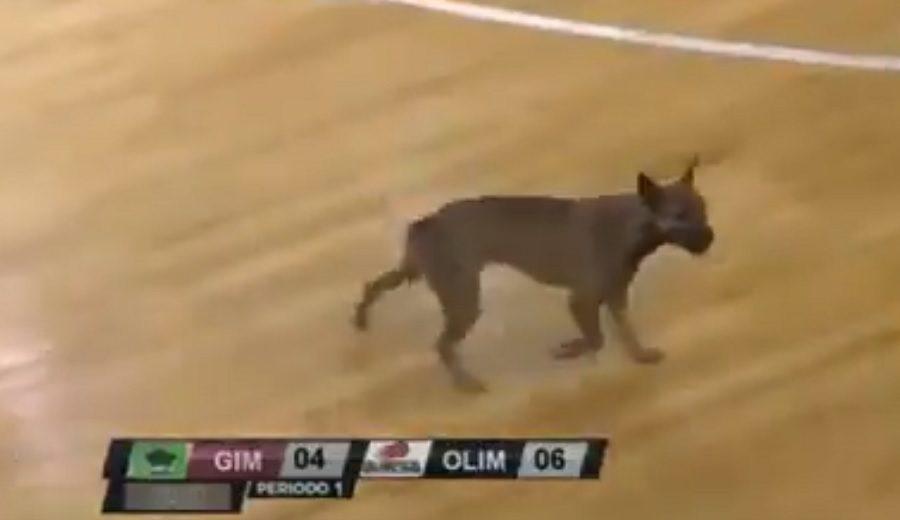 Argentina siempre sorprende: ¡un perro se cuela en la cancha!